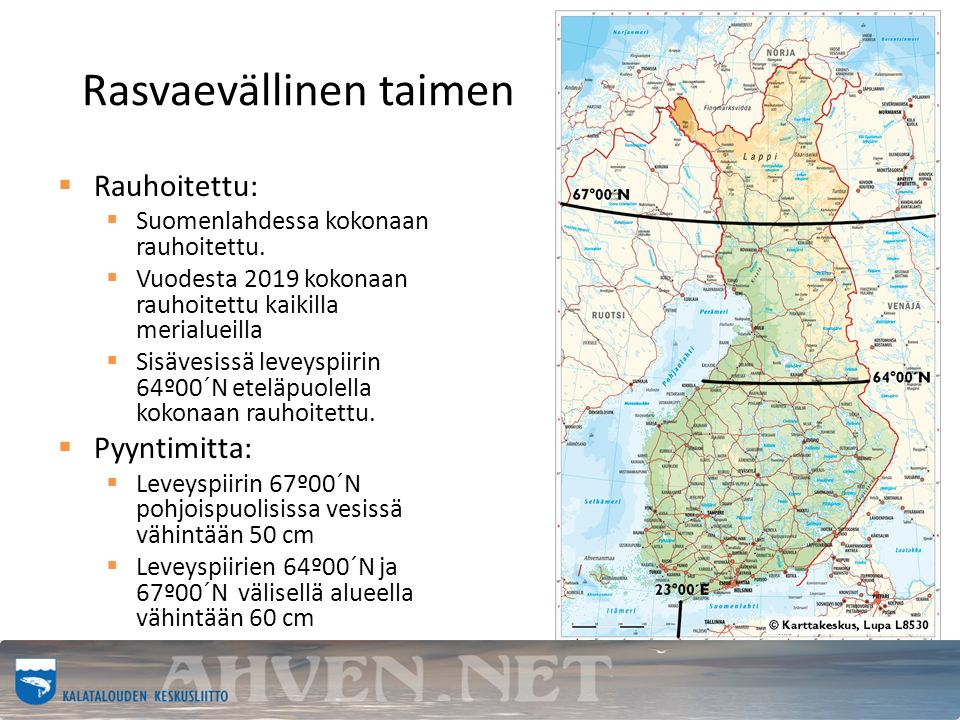 Rasvaevällinen taimen  Rauhoitettu:  Suomenlahdessa kokonaan rauhoitettu.
