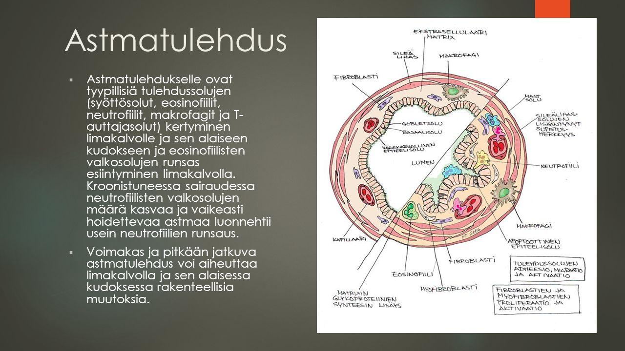 Astmatulehdus  Astmatulehdukselle ovat tyypillisiä tulehdussolujen (syöttösolut, eosinofiilit, neutrofiilit, makrofagit ja T- auttajasolut) kertyminen limakalvolle ja sen alaiseen kudokseen ja eosinofiilisten valkosolujen runsas esiintyminen limakalvolla.
