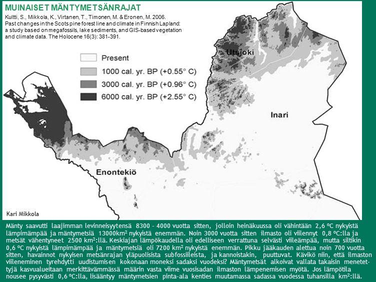 Mänty saavutti laajimman levinneisyytensä 8300 - 4000 vuotta sitten, jolloin heinäkuussa oli vähintään 2,6 o C nykyistä lämpimämpää ja mäntymetsiä 13000km 2 nykyistä enemmän.