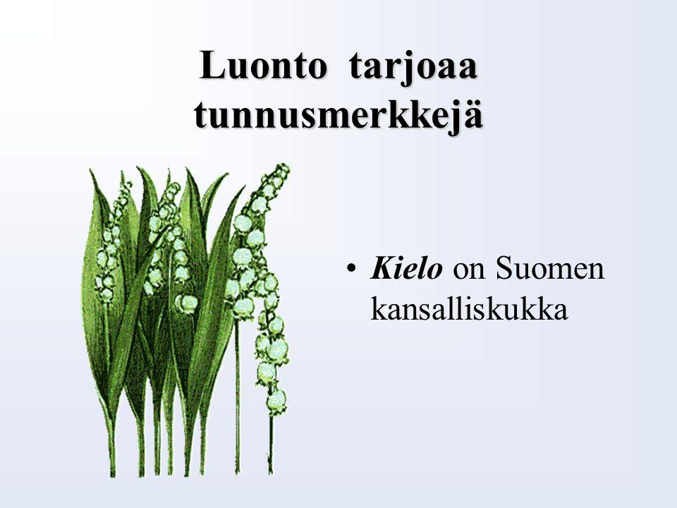 Luonto tarjoaa tunnusmerkkejä Koivu on Suomen kansallispuu