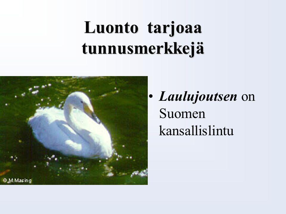 Luonto tarjoaa tunnusmerkkejä Kielo on Suomen kansalliskukka