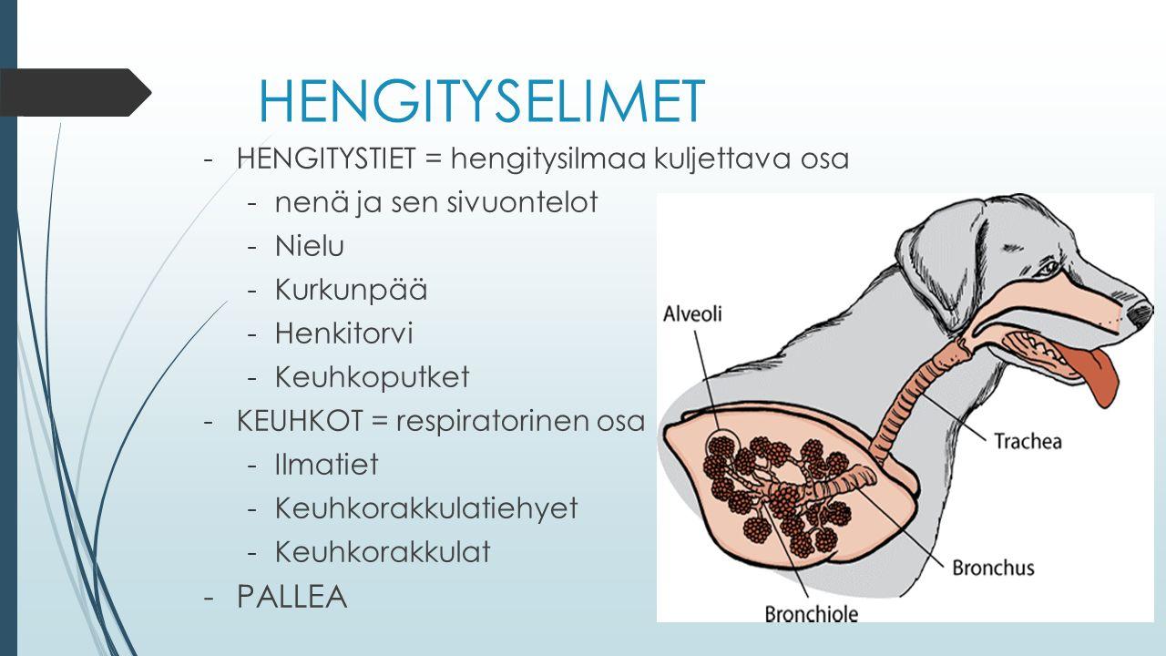 HENGITYSELIMET -HENGITYSTIET = hengitysilmaa kuljettava osa -nenä ja sen sivuontelot -Nielu -Kurkunpää -Henkitorvi -Keuhkoputket -KEUHKOT = respiratorinen osa -Ilmatiet -Keuhkorakkulatiehyet -Keuhkorakkulat -PALLEA