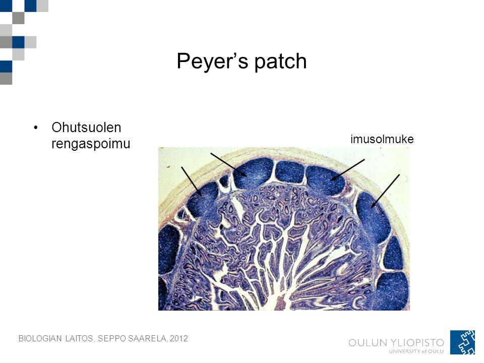 BIOLOGIAN LAITOS, SEPPO SAARELA, 2012 Peyer's patch Ohutsuolen rengaspoimu imusolmuke