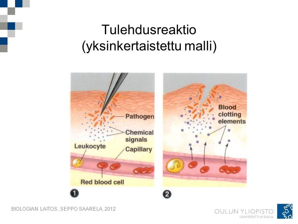 BIOLOGIAN LAITOS, SEPPO SAARELA, 2012 Tulehdusreaktio (yksinkertaistettu malli)