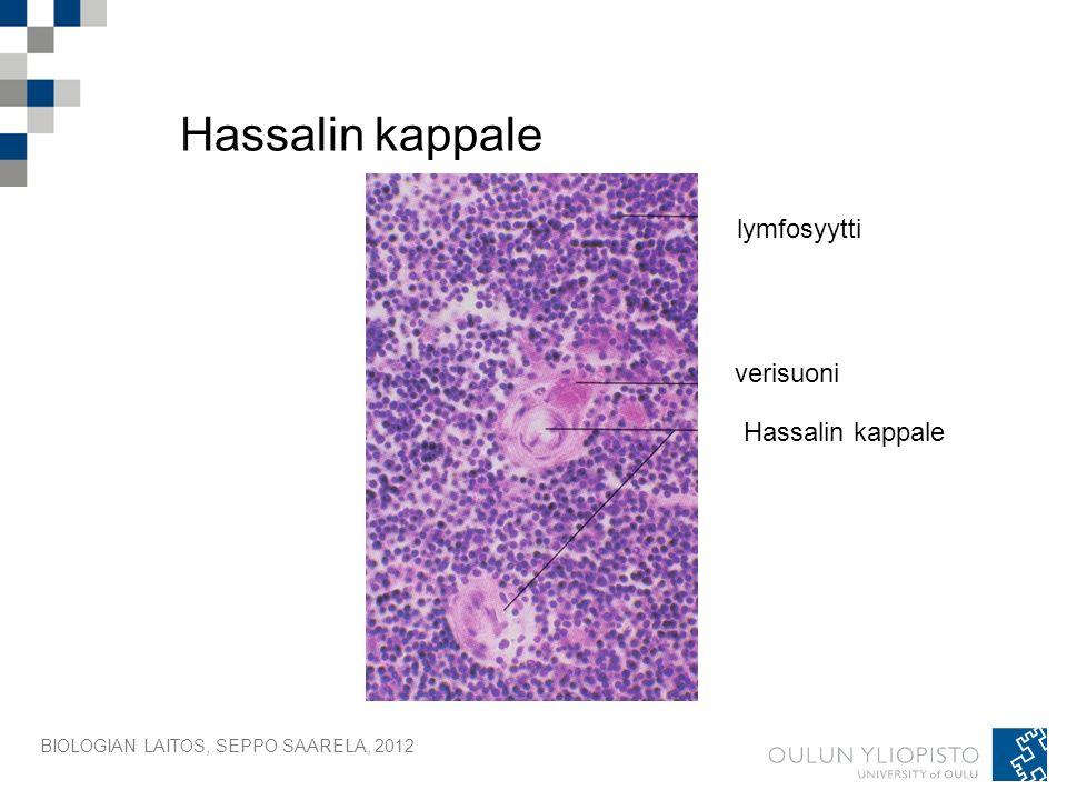 BIOLOGIAN LAITOS, SEPPO SAARELA, 2012 Hassalin kappale lymfosyytti verisuoni Hassalin kappale
