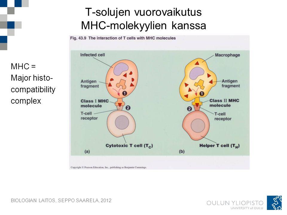 BIOLOGIAN LAITOS, SEPPO SAARELA, 2012 T-solujen vuorovaikutus MHC-molekyylien kanssa MHC = Major histo- compatibility complex