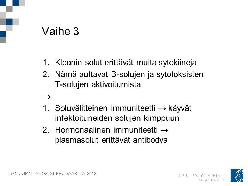 BIOLOGIAN LAITOS, SEPPO SAARELA, 2012 Vaihe 3 1.Kloonin solut erittävät muita sytokiineja 2.Nämä auttavat B-solujen ja sytotoksisten T-solujen aktivoitumista  1.Soluvälitteinen immuniteetti  käyvät infektoituneiden solujen kimppuun 2.Hormonaalinen immuniteetti  plasmasolut erittävät antibodya