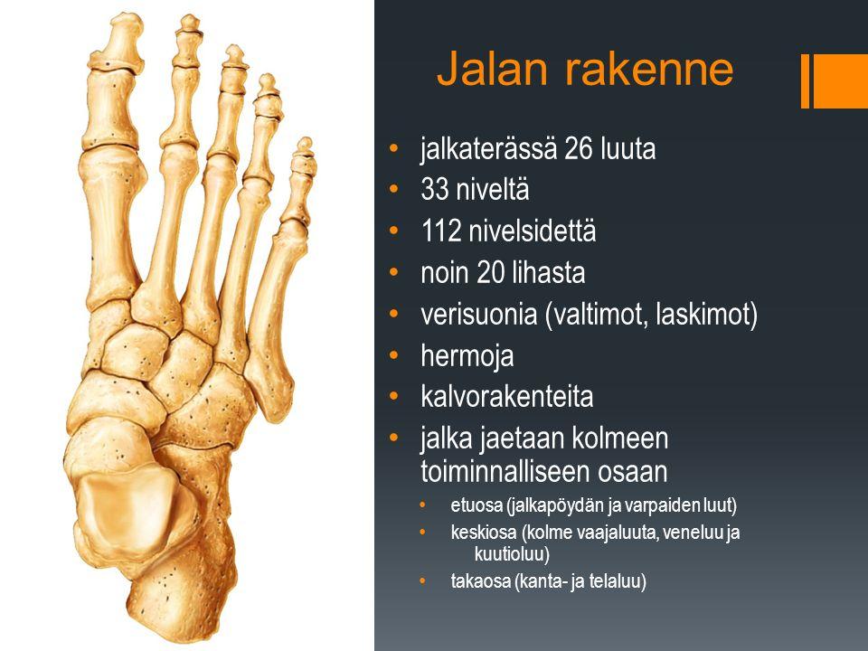 Jalan rakenne jalkaterässä 26 luuta 33 niveltä 112 nivelsidettä noin 20 lihasta verisuonia (valtimot, laskimot) hermoja kalvorakenteita jalka jaetaan kolmeen toiminnalliseen osaan etuosa (jalkapöydän ja varpaiden luut) keskiosa (kolme vaajaluuta, veneluu ja kuutioluu) takaosa (kanta- ja telaluu)