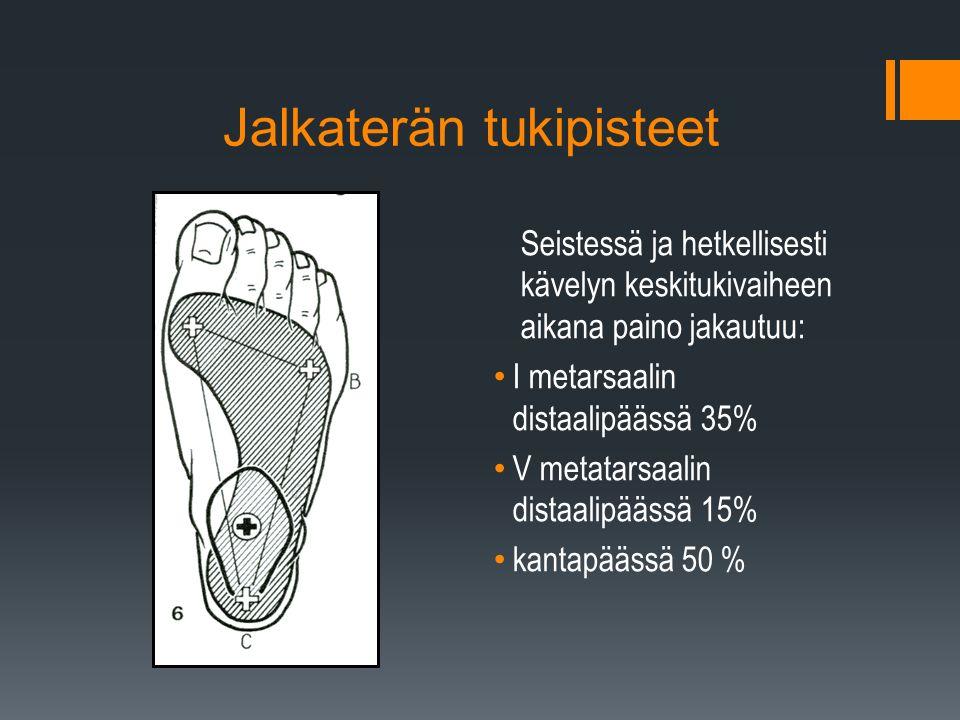 Jalkaterän tukipisteet Seistessä ja hetkellisesti kävelyn keskitukivaiheen aikana paino jakautuu: I metarsaalin distaalipäässä 35% V metatarsaalin distaalipäässä 15% kantapäässä 50 %