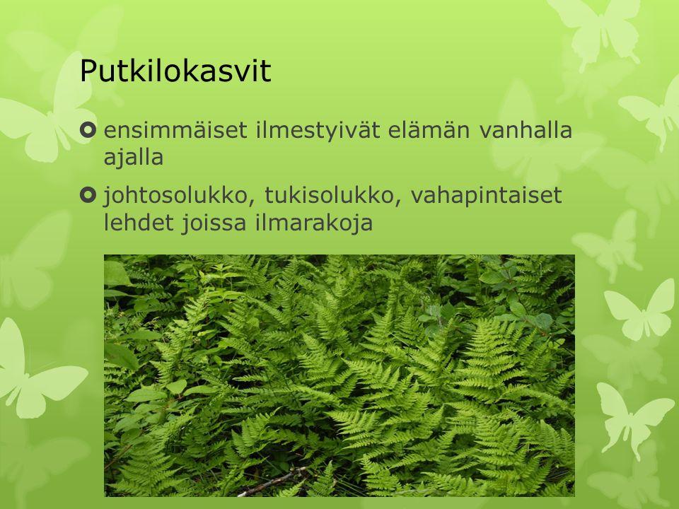 Sammalet  Sopeutuivat ensimmäisinä kasveina maalle  Sekovartisia  Kosteiden paikkojen kasvi  Itiökasveja