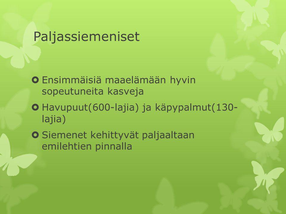 Siemenkasvit  Kaikki siemenkasvit ovat putkilokasveja  Siemenkasvien sporofyytti on koko nähtävissä oleva kasvi  Kahdenlaisia gametofyyttejä  Siemenkasvin heteissä kehittyy siitepölyä  Paljas- ja koppisiemeniset  Lisääntyvät suvullisesti ja suvuttomasti