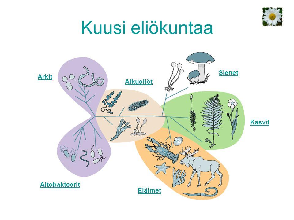Kuusi eliökuntaa Eläimet Kasvit Sienet Alkueliöt Arkit Aitobakteerit