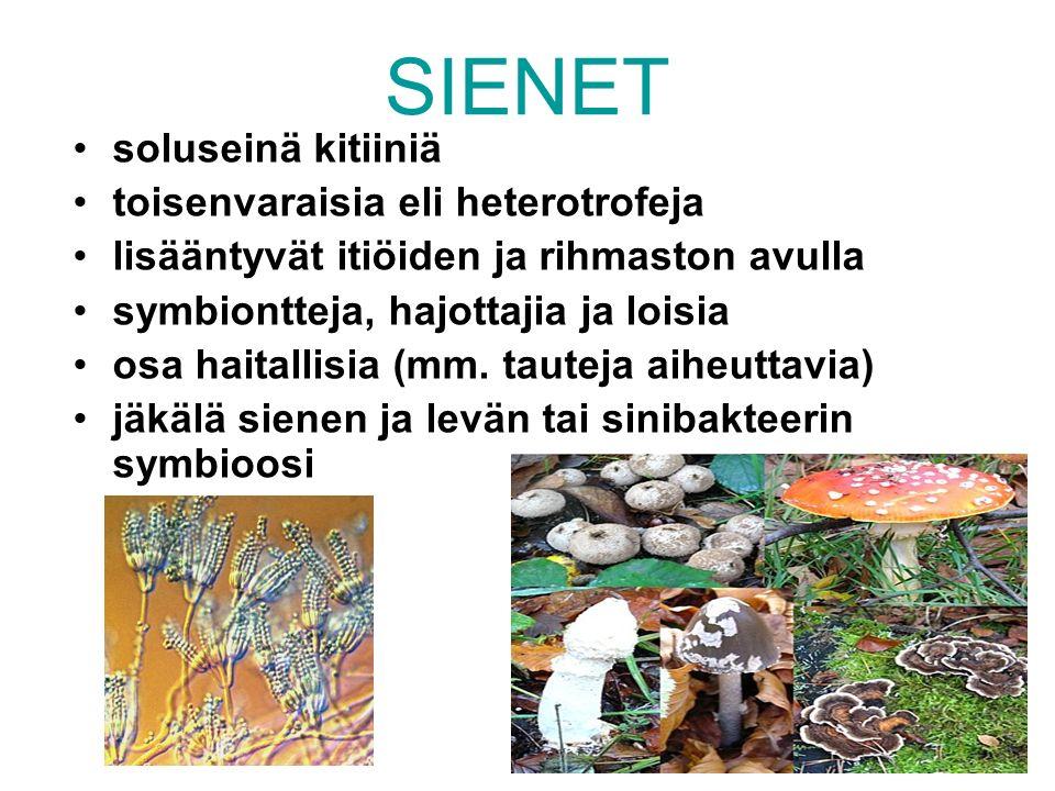 SIENET soluseinä kitiiniä toisenvaraisia eli heterotrofeja lisääntyvät itiöiden ja rihmaston avulla symbiontteja, hajottajia ja loisia osa haitallisia (mm.