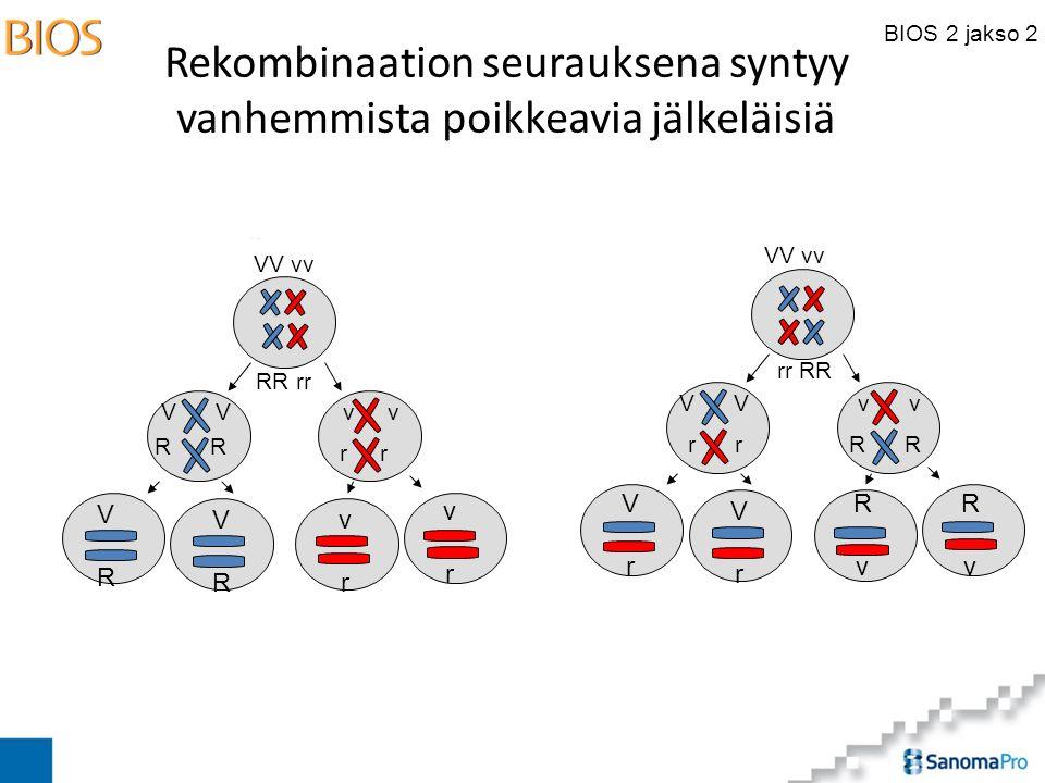 BIOS 2 jakso 2 Rekombinaation seurauksena syntyy vanhemmista poikkeavia jälkeläisiä VV vv RR rr VV vv rr RR V R v R r v r VRVR VRVR vrvr vrvr VrVr VrVr RvRv RvRv
