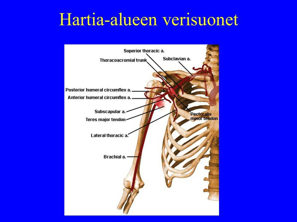 Hartia-alueen verisuonet