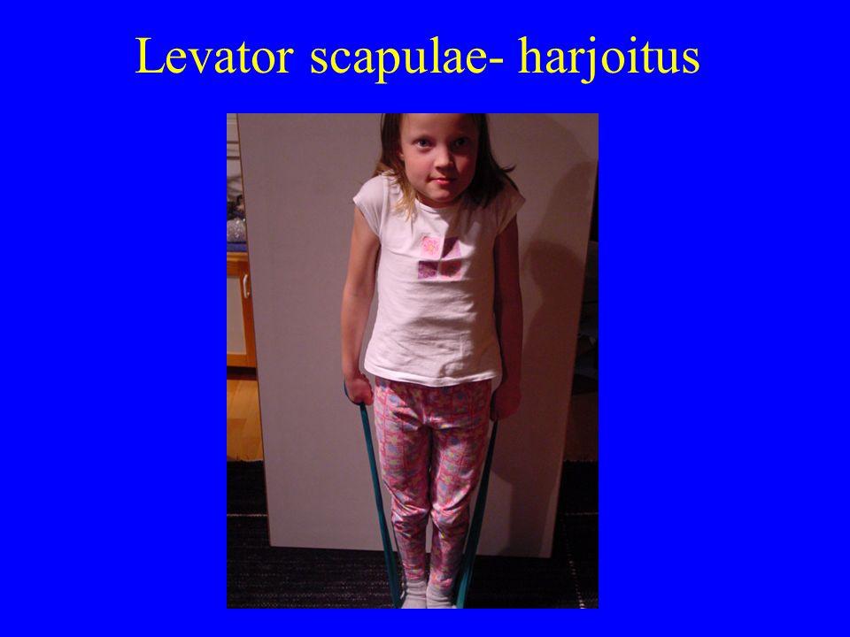 Levator scapulae- harjoitus