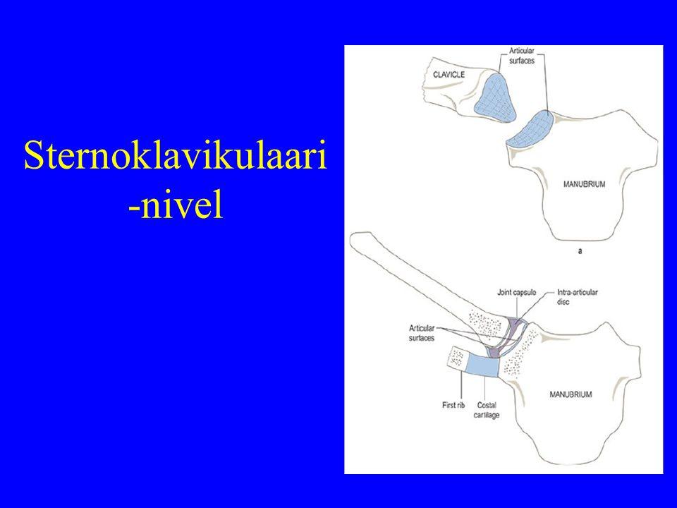 Sternoklavikulaari -nivel