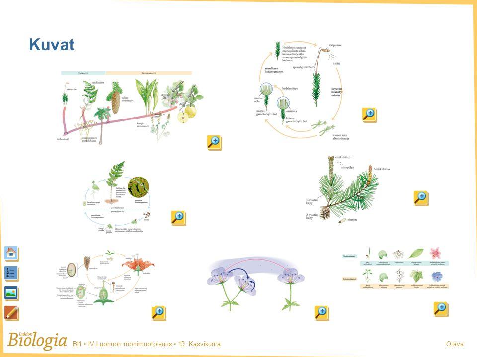 BI1 IV Luonnon monimuotoisuus 15. KasvikuntaOtava Kuvat