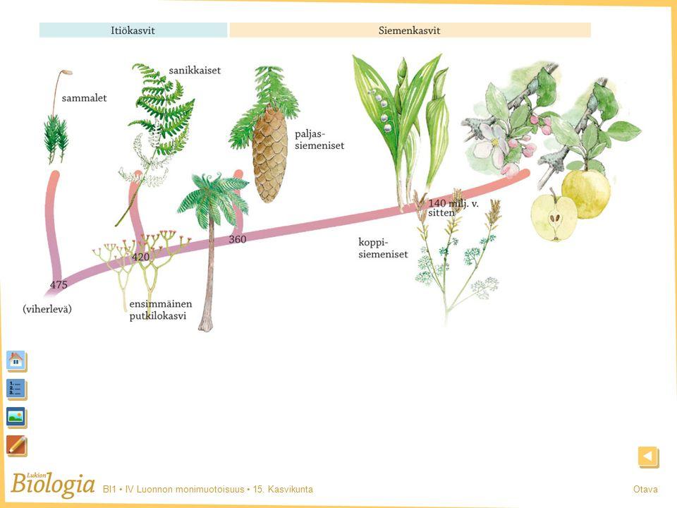 BI1 IV Luonnon monimuotoisuus 15. KasvikuntaOtava Kasvien sukupuu