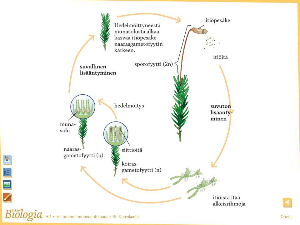 BI1 IV Luonnon monimuotoisuus 15. KasvikuntaOtava Sammal