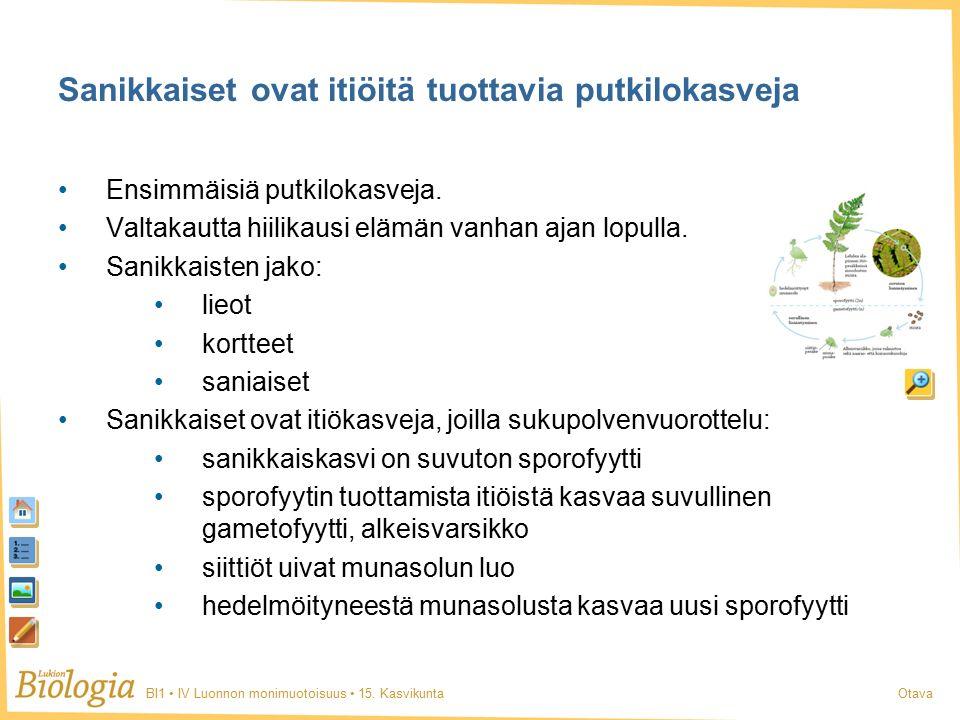 BI1 IV Luonnon monimuotoisuus 15. KasvikuntaOtava Ensimmäisiä putkilokasveja.