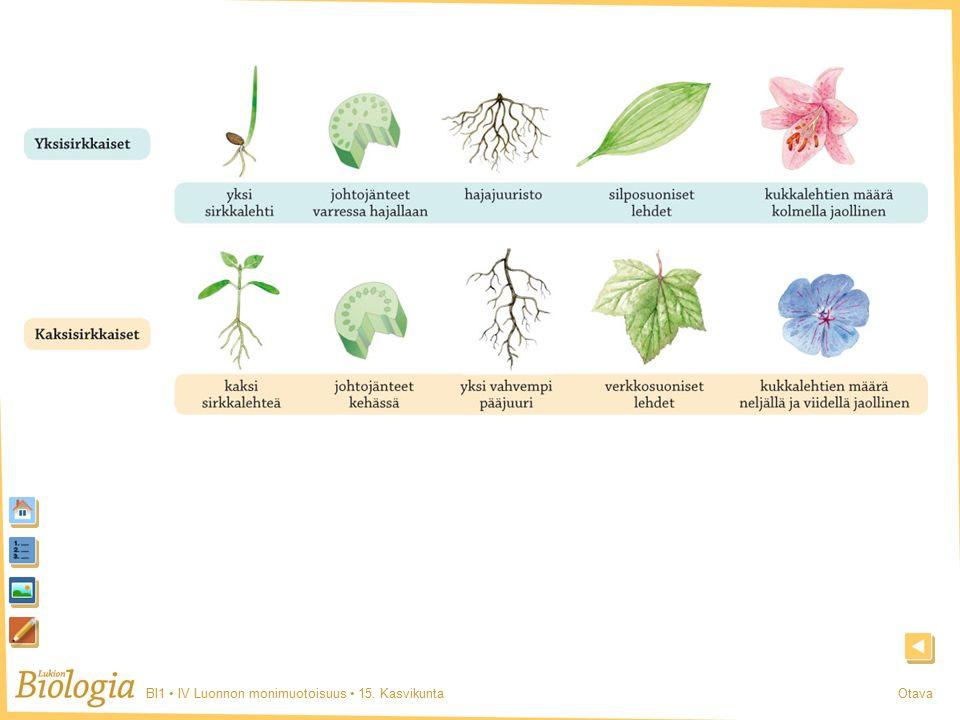 BI1 IV Luonnon monimuotoisuus 15. KasvikuntaOtava Sirkkaisuus
