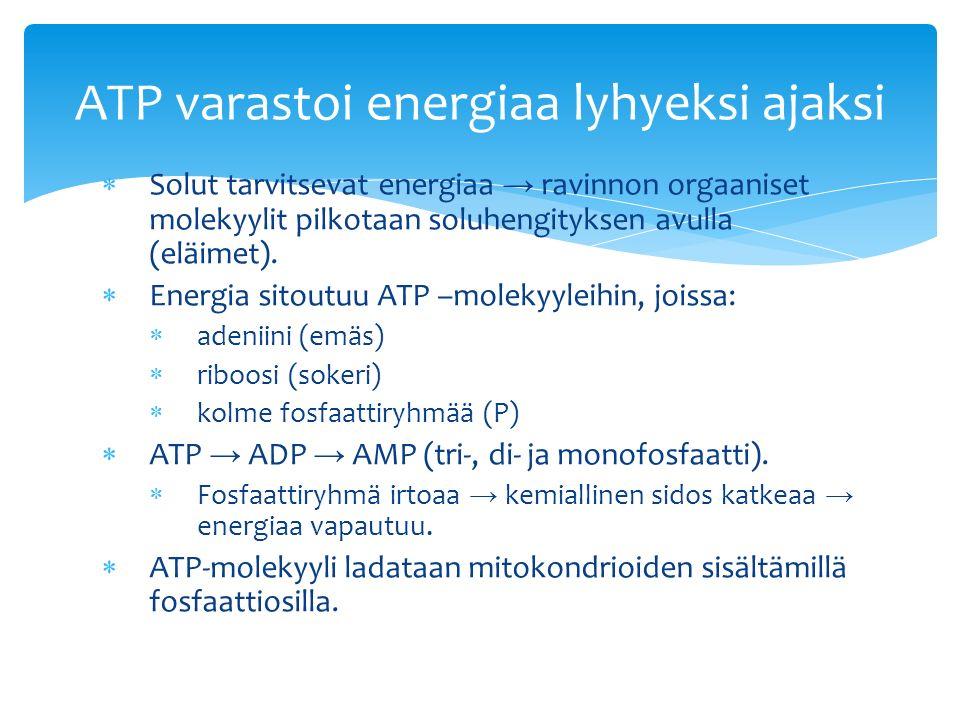  Solut tarvitsevat energiaa → ravinnon orgaaniset molekyylit pilkotaan soluhengityksen avulla (eläimet).