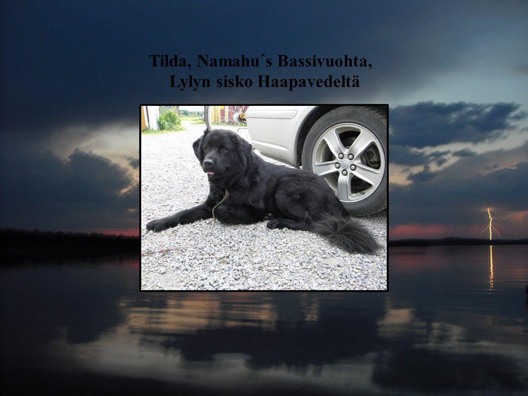 Tilda, Namahu´s Bassivuohta, Lylyn sisko Haapavedeltä