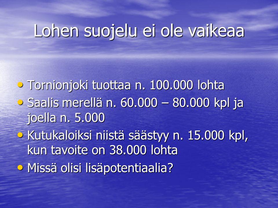 Lohen suojelu ei ole vaikeaa • Tornionjoki tuottaa n.