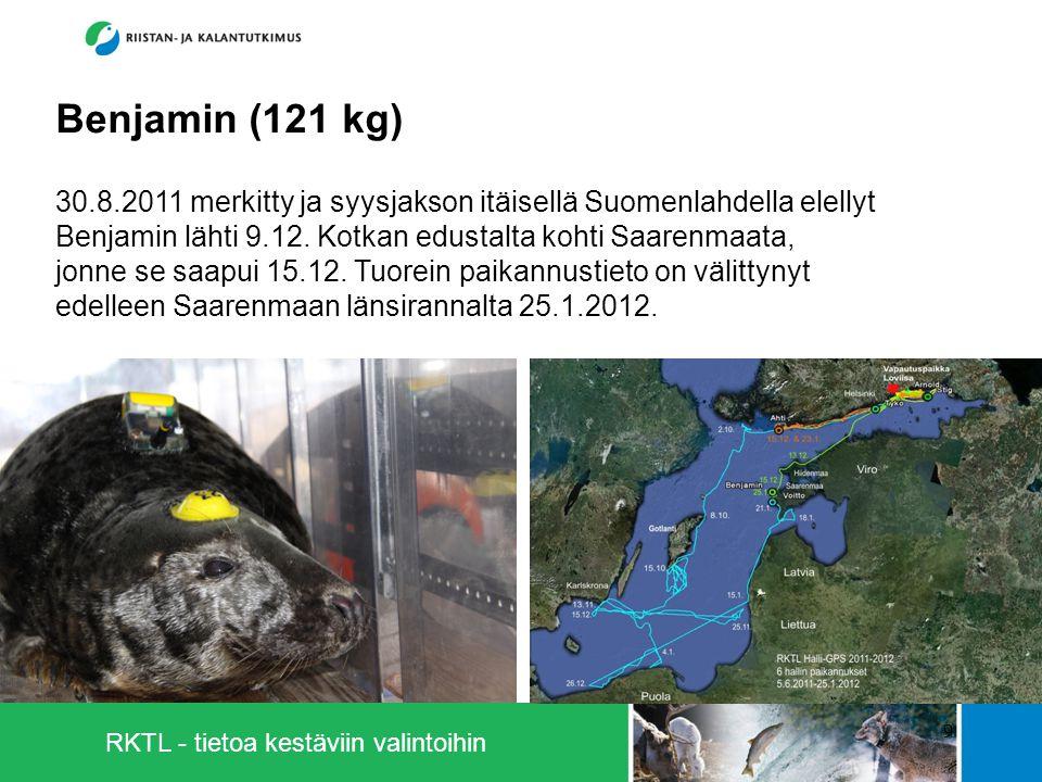 RKTL - tietoa kestäviin valintoihin 9 Benjamin (121 kg) 30.8.2011 merkitty ja syysjakson itäisellä Suomenlahdella elellyt Benjamin lähti 9.12.