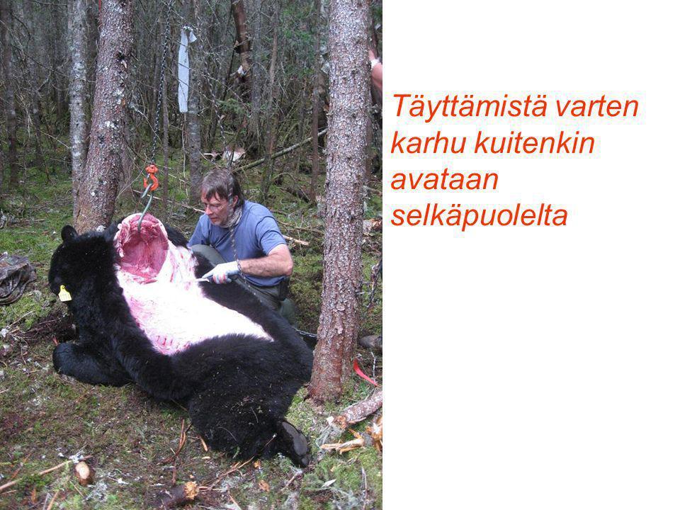 Täyttämistä varten karhu kuitenkin avataan selkäpuolelta