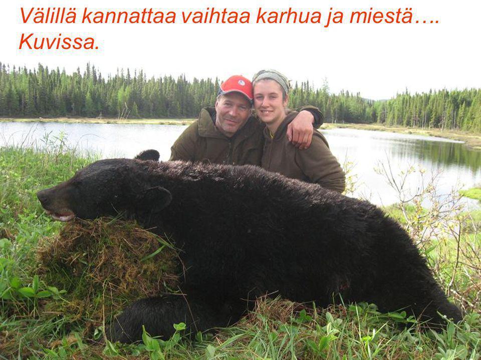 Välillä kannattaa vaihtaa karhua ja miestä…. Kuvissa.