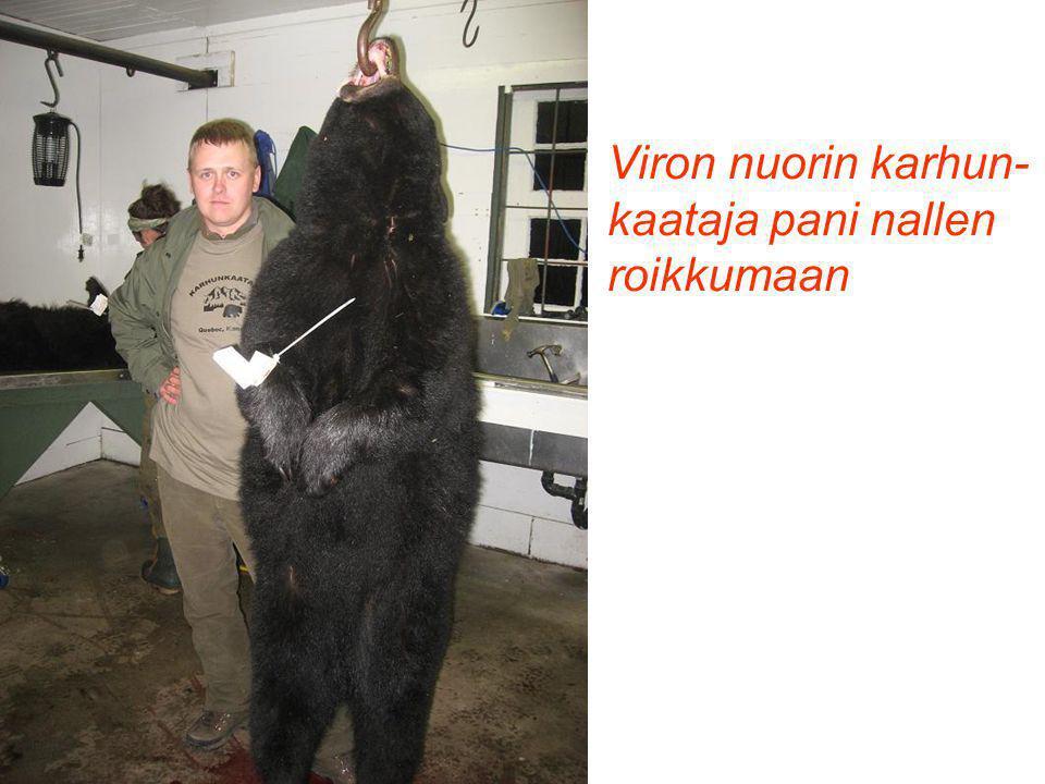 Viron nuorin karhun- kaataja pani nallen roikkumaan
