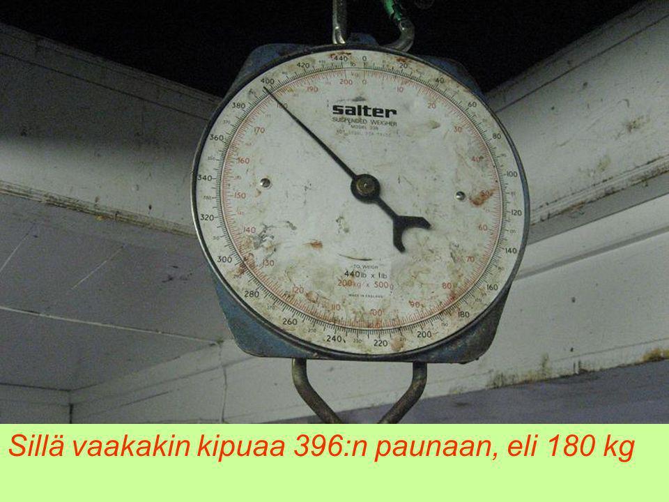 Sillä vaakakin kipuaa 396:n paunaan, eli 180 kg