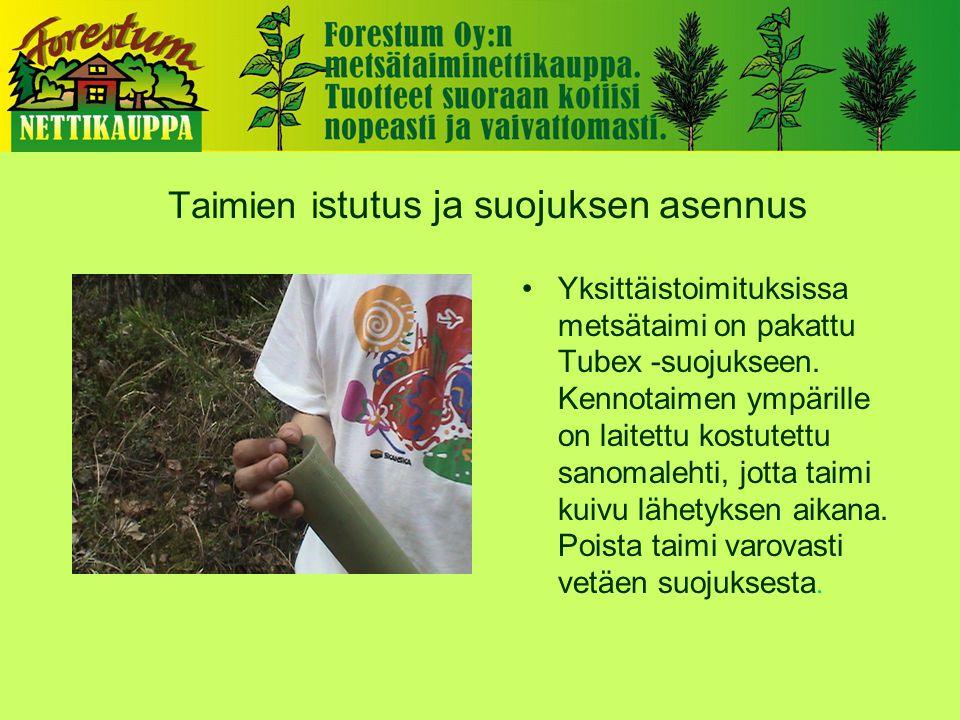 Taimien i stutus ja suojuksen asennus •Yksittäistoimituksissa metsätaimi on pakattu Tubex -suojukseen.