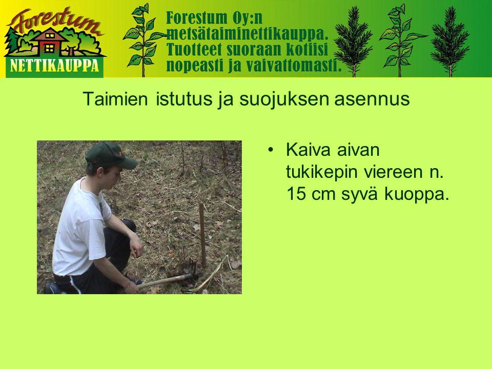 Taimien i stutus ja suojuksen asennus •Kaiva aivan tukikepin viereen n. 15 cm syvä kuoppa.