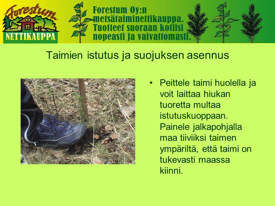 Taimien i stutus ja suojuksen asennus •Peittele taimi huolella ja voit laittaa hiukan tuoretta multaa istutuskuoppaan.