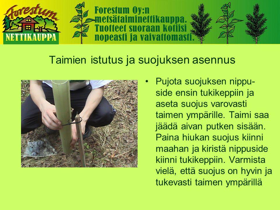 Taimien i stutus ja suojuksen asennus •Pujota suojuksen nippu- side ensin tukikeppiin ja aseta suojus varovasti taimen ympärille.