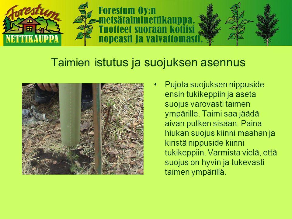 Taimien i stutus ja suojuksen asennus •Pujota suojuksen nippuside ensin tukikeppiin ja aseta suojus varovasti taimen ympärille.
