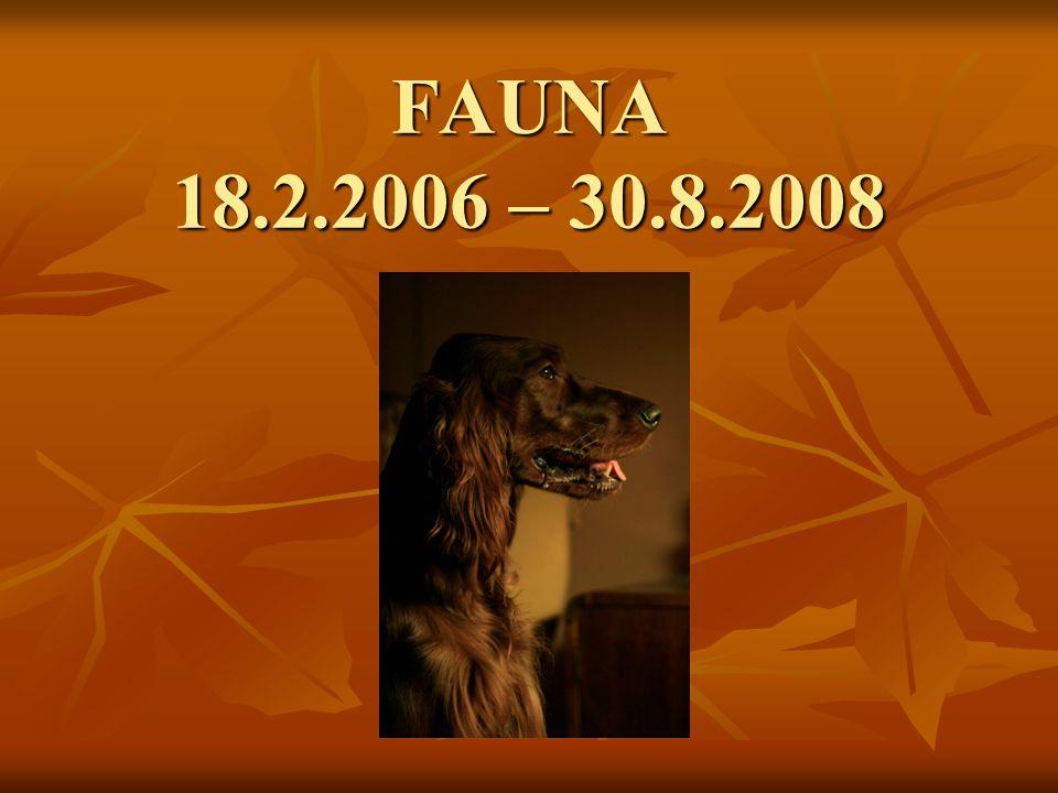 FAUNA 18.2.2006 – 30.8.2008