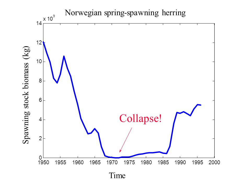 x 10 9 Norwegian spring-spawning herring Spawning stock biomass (kg) Time Collapse!